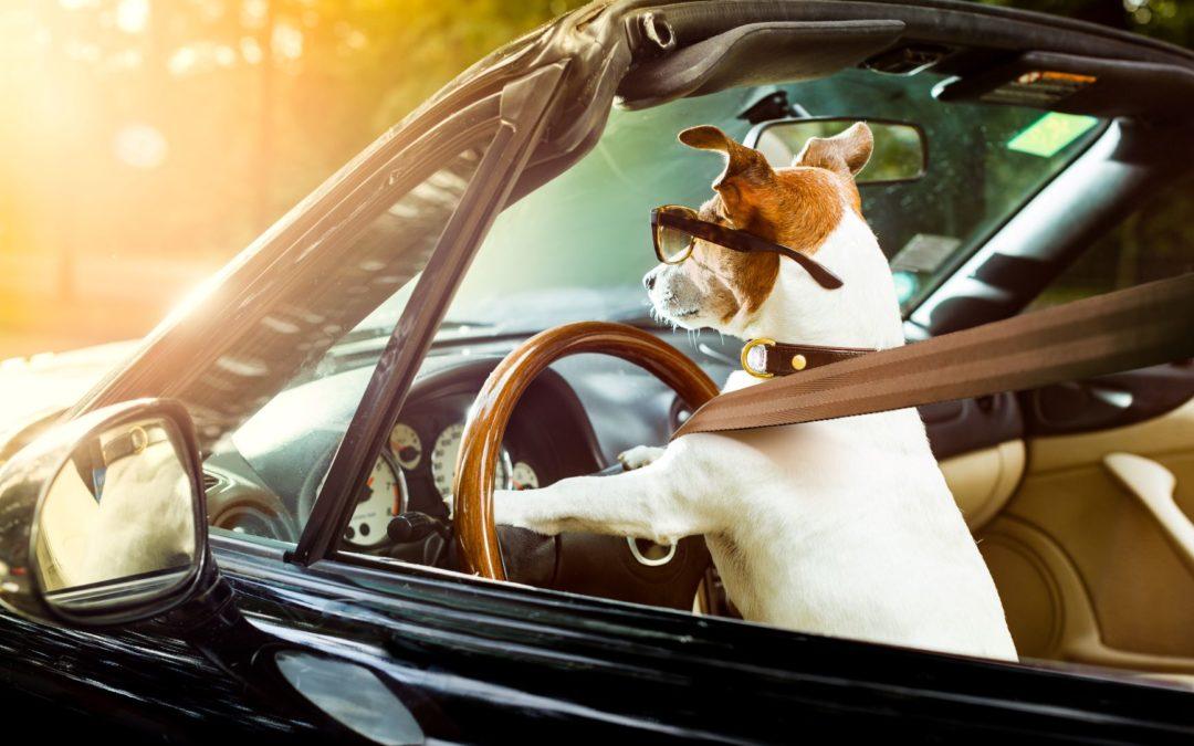 Cómo llevar a tu mascota de forma segura en el coche